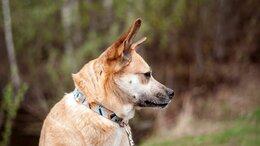 Собаки - Линда - некрупная собака в дар, 0