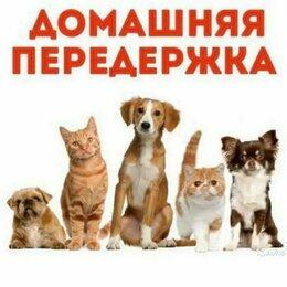 Услуги для животных - Передержка собак, 0