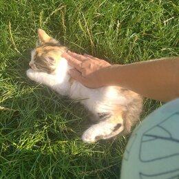 Кошки - Умная кошечка, 0