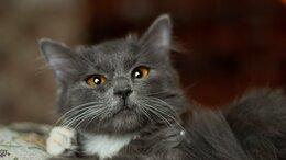 Кошки - Фанта - трепетный  котенок в добрые руки, 0
