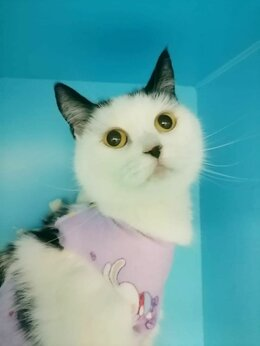 Кошки - Домашняя кошка в добрые руки , 0