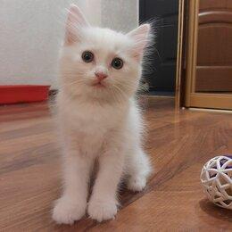 Кошки - Отдам кошечку в хорошие руки , 0