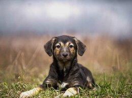 Собаки - Чье-то мохнатое, улыбчивое счастье, 0