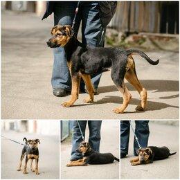 Собаки - Отличный щенок мальчик , 0