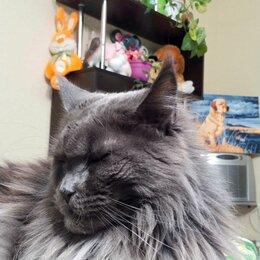 Услуги для животных - Зоопсихолог .кошки, 0
