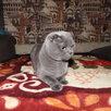 Котята по цене 2500₽ - Кошки, фото 5
