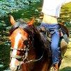 Конные прогулки в Сочи по цене 2500₽ - Экскурсии и туристические услуги, фото 14