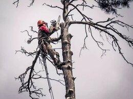 Архитектура, строительство и ремонт - Профессиональный спил деревьев, расчистка участков, 0