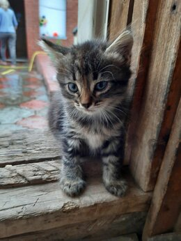 Кошки - Отдам красивых котят даром, 0