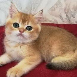 Кошки - Котенок ждет нового хозяйна, 0