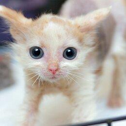 Кошки - Необычная малышка Мармазетка, 0