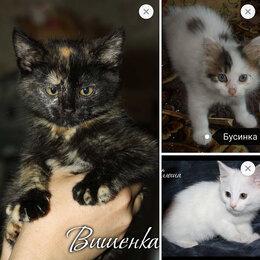 Кошки - Три маленьких красавицы ищут семьи! , 0