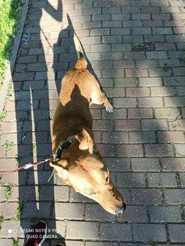 Животные - Найден пëс, в районе метро Царицыно, 0