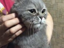 Кошки - Кот ищет хозяев, 0