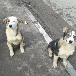 Собаки - Цветные мальчишки в поиске хозяина , 0