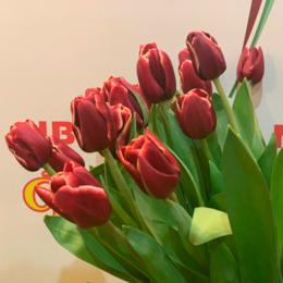 Цветы, букеты, композиции - Флорико Тюльпан шоколадный (цена за штуку),  см, 0