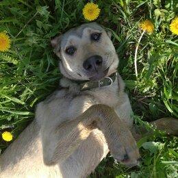 Собаки - Девочка лапочка 9 месяц, 0