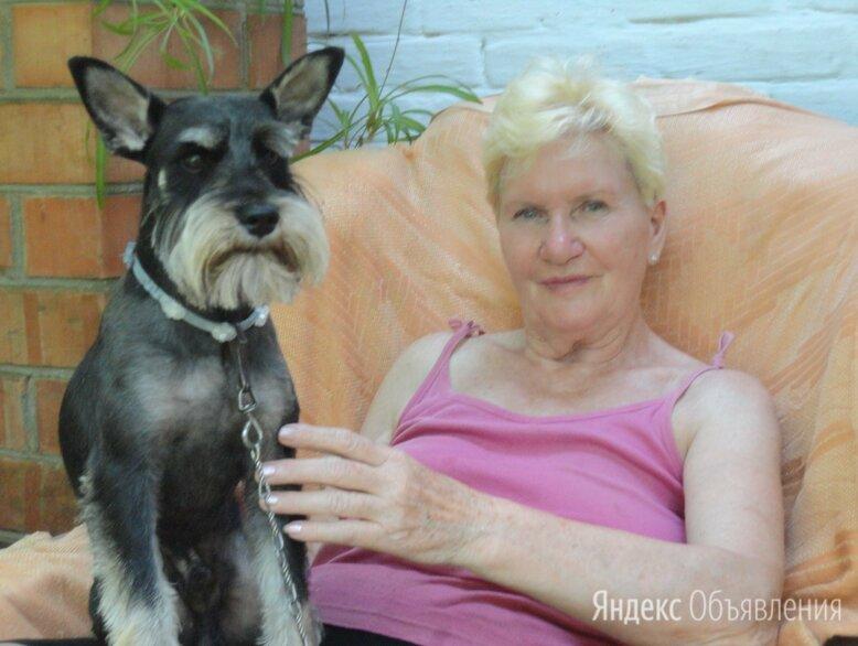 Присмотр за  маленькой собачкой  - Услуги для животных, фото 0