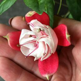 Комнатные растения - Фуксия ампельная (Размер горшка-6 см), 0