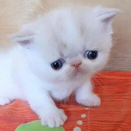 Кошки - Мальчики экзотики, 0