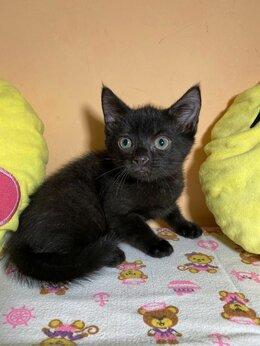Кошки - Само милашество котенок Фёкла ищет дом , 0