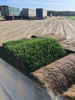 Газоны - Рулонный газон | Премиум, 0