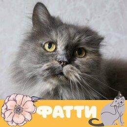Кошки - Кошка Фатти, 0