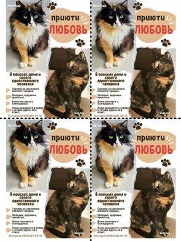 Кошки - Замечательные кошечки, 0