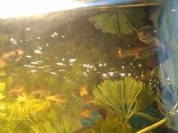 Аквариумные рыбки - Мальки Гуппи, 0