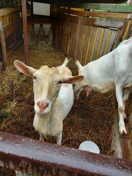 Сельскохозяйственные животные - Козы , 0
