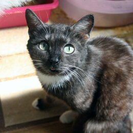 Кошки - Кошка Дикси , 0