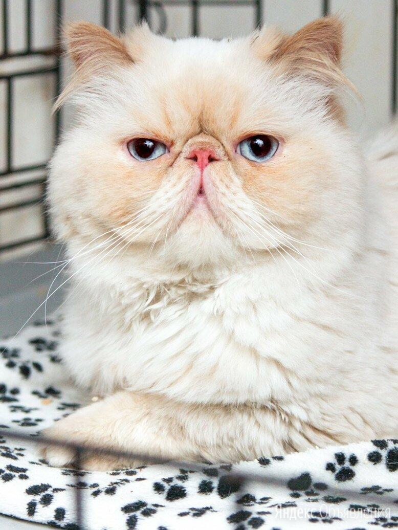 Красотка Маваши, от которой отказались хозяева по цене даром - Кошки, фото 0