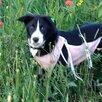 Животные собаки по цене даром - Собаки, фото 4