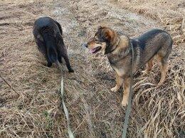 Собаки - Фанта ищет хозяев, 0