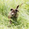 Мелкаш. Небольшая и добрая собачка ищет дом!!! по цене 5₽ - Собаки, фото 0