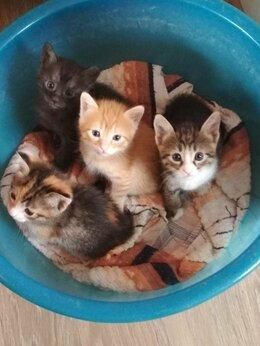 Кошки - Котята 3 месяца, 0
