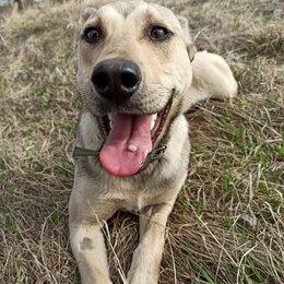 Собаки - Щенок девочка в дар, 0
