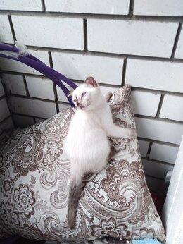 Кошки - Отдам котёнка в добрые руки, 0