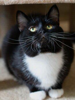 Кошки - Молодой, здоровый и очень ласковый Юсуф ищет дом, 0