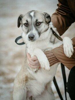 Собаки - Метис пойнтера срочно ищет дом , 0