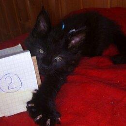 Кошки - Мартовские котики-мурлыки, 0
