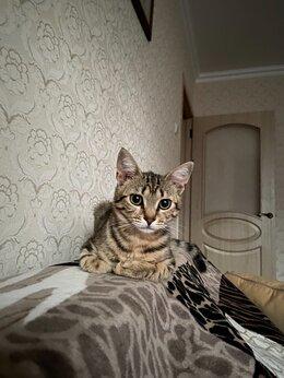 Кошки - Кошечку в добрые руки, 0