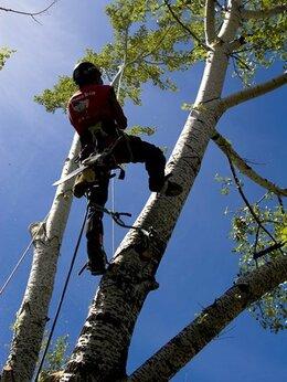 Бытовые услуги - Спил деревьев любой сложности., 0