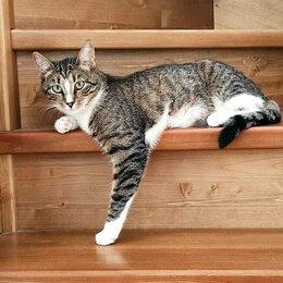 Кошки - Очень ласковая нежная девочка Белочка ищет дом, 0