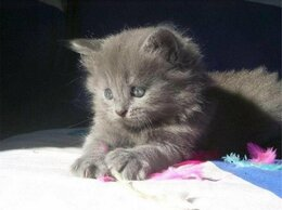 Кошки - котята вам в радость, 0