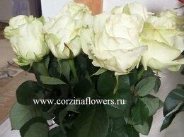 Цветы, букеты, композиции - Букет крупных белых роз Аваланч , 0