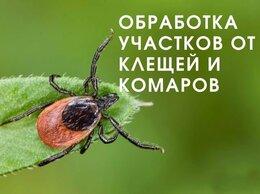 Бытовые услуги - Уничтожение клещей, комаров и короеда, 0