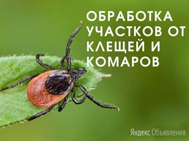 Уничтожение клещей, комаров и короеда - Бытовые услуги, фото 0