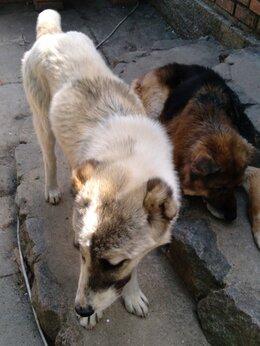 Собаки - Животные, 0