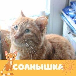 Кошки - Кошка Солнышка, 0